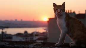 """KEDi Review: """"A wonderful, warm-hearted cat documentary"""""""