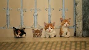 Wonderful Istanbul street cats documentary 'KEDI' confirms UK releasedate