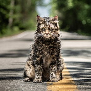 Pet Sematary review: Dir. Kevin Kölsch and Dennis Widmyer (2019)