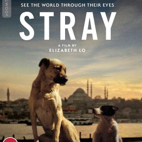 Win a copy of Elizabeth Lo's Stray onBlu-ray